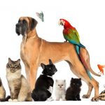 Franquia-Pet-Shop-Pet-mais-vida