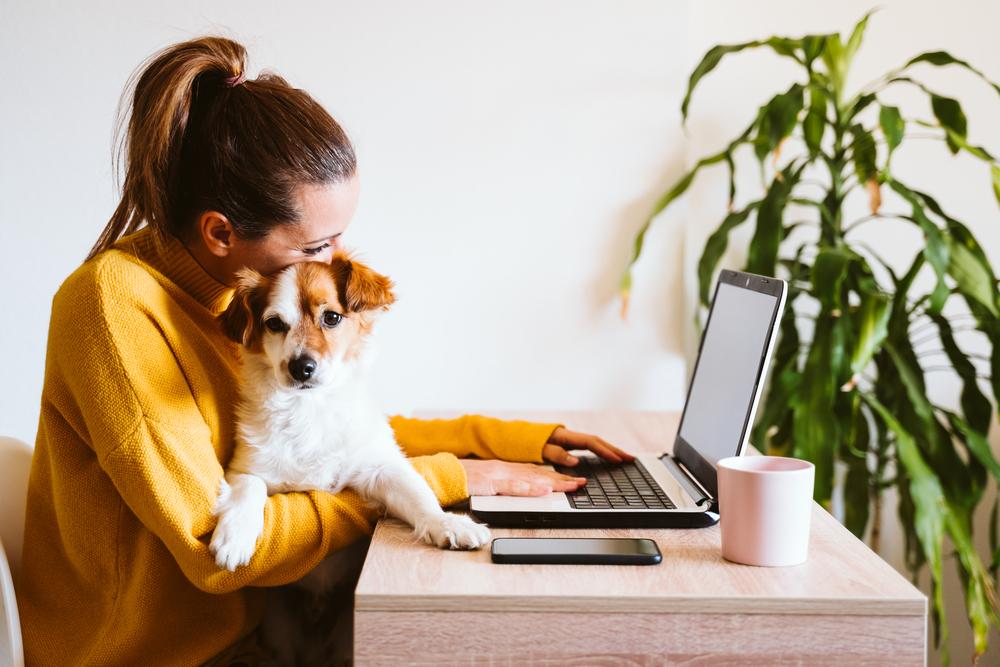 Mulher segura seu cãozinho no colo enquanto trabalha em frente ao seu notebook (imagem ilustrativa). Texto: franquia de pet shop