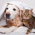 Um cachorro e um gato sob a coberta. Imagem ilustrativa texto franquia de pet shop