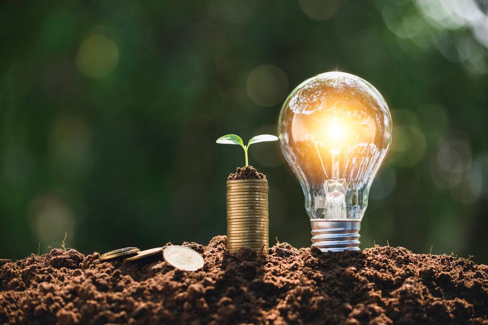 Uma lâmpada acessa ao lado de um ramo de planta sob várias moedas empilhadas na terra (imagem ilustrativa). Franquia de lava jato