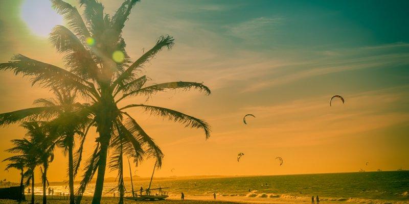Coqueiros em uma praia com sol sobre as folhas. Imagem ilustrativa texto franquias de sucesso no Brasil.